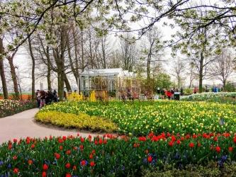 květinový park Keukenhof