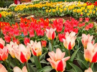 květinová výstava Keukenhof